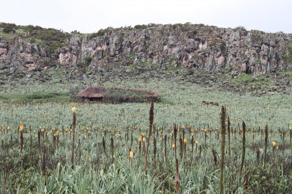 Settlements in BMNP