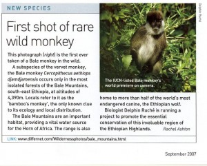 Bale Monkey in the News (Delphine Ruche)